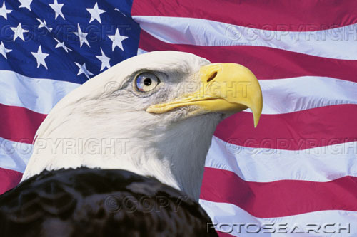 american flag background with eagle. A well regulated Militia,